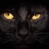 Pano Ba Paliitin Ang Tyan - last post by black cat